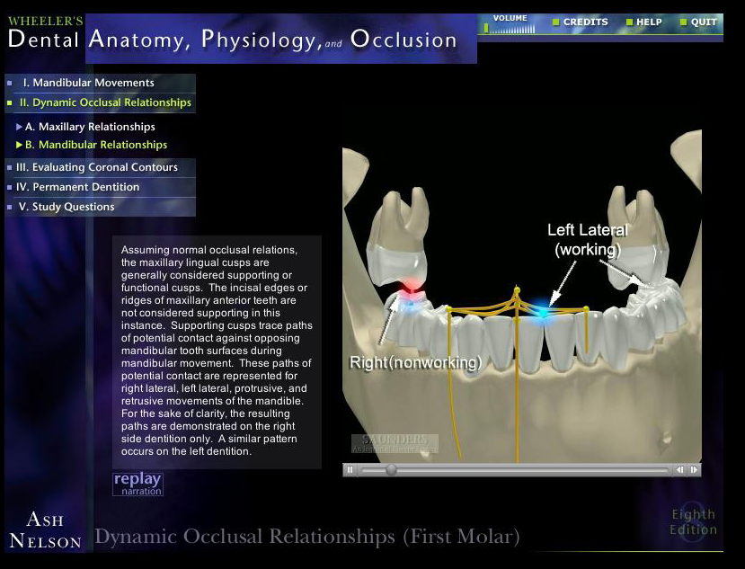 Dental Anatomy Wheelers Choice Image - human body anatomy